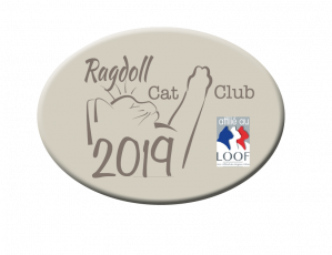 ragdoll cat club